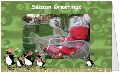 Season Greetings Postcard