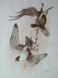 The Peregrine and the Pheasant